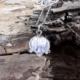 Schneeglöckchen mit versilbertem Stahlseil